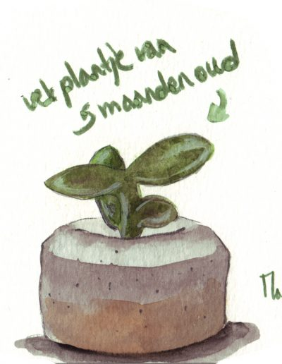 Ladies Drawing Night #1 plant bister tekenen schilderen